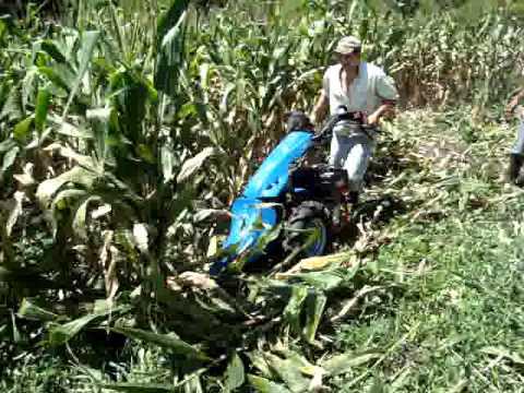 Motosegadora motocultor BCS cortando maíz para ensilaje. Tractocentro Colombia