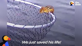 Drowning Chipmunk Rescued by Fishermen | The Dodo