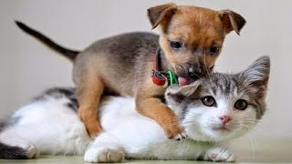 Funny Animal Videos ► When crazy Dogs and Cats in together 2015 ► Animals TV