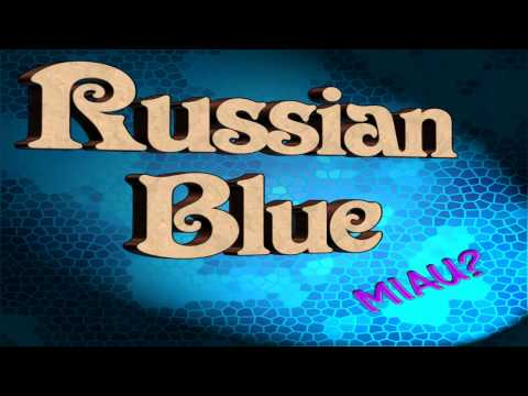 Russian Blue - Hangover and Condoms