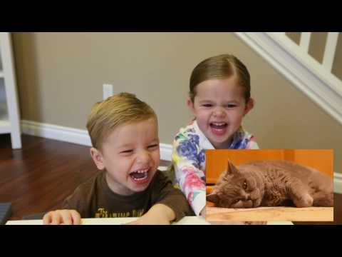 CLAIRE AND CARSON GET INTRODUCED TO CAT VIDEOS!!