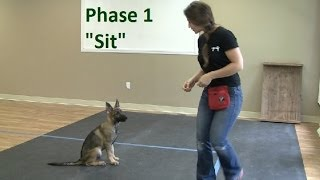 How to Train a Dog to