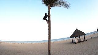 Dangerous Palm Tree Climb FAIL!