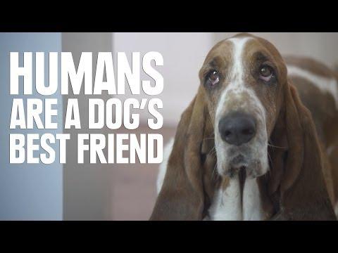 Xxx Mp4 Humans Are A Dog S Best Friend 3gp Sex