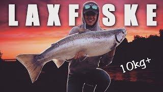 MAGISKT LAXFISKE - Salmon fishing in Sweden