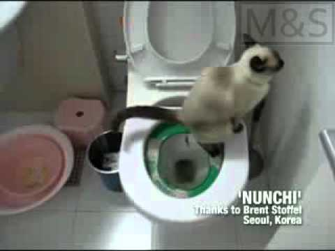 Litter Kwitter Sistema de entrenamiento para gatos Subtitulado