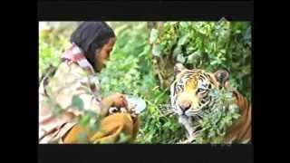 Harimau Dijadikan Peliharaan
