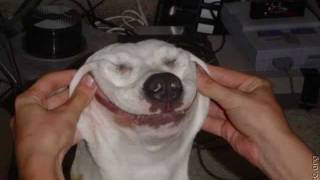 ŚMIESZNE ZDJĘCIA KOTÓW I PSÓW ;-) (funny photos dogs and cats)