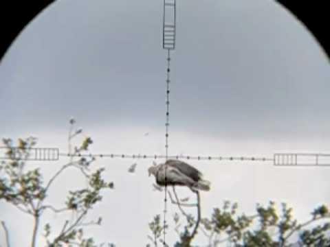 Air Rifle Hunting Pigeons 2012