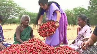 Tamil Movies 2014 Full Movie New Release Kalyanakanavugal |  Tamil Movies | [HD]