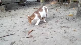 mioo mioo--বিরাল