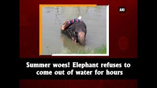 Summer woes! Elephant refuses to come out of water for hours - Punjab News
