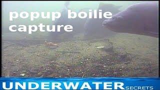 underwater carp popup boilie capture