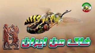مستند فارسی - زنبور های جنگجو