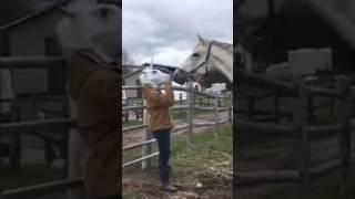Horse fuck girl