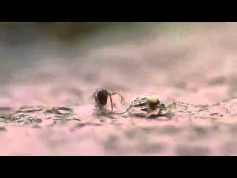 Hormiga VS Araña con un Final Inesperado