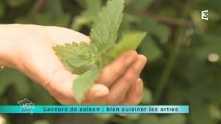 Saveur de saison : les orties