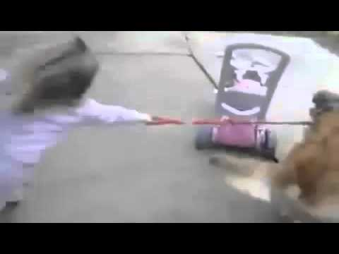 Little Girl Owned By Dog  FUNNY