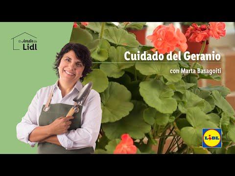 Cuidado Del Geranio Lidl Jardin