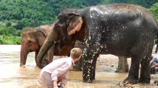 A boy bathe an elephant at Elephant Nauture Park