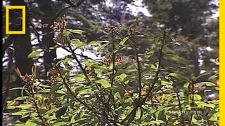 Monarch Butterflies | National Geographic
