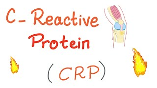 C-Reactive Protein (CRP) | Inflammation | Acute phase reactant