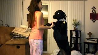 Girl taught her sweet dog some tricks