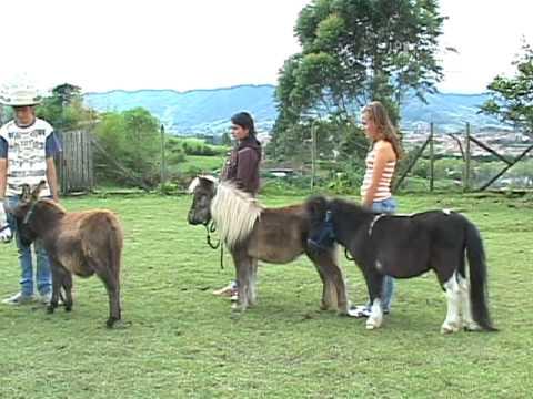 caballos miniaturas