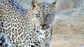 هل تعلم أن هذه الحيوانات موجودة في السعودية