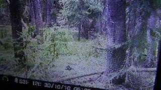 Trail Cam Review On Site, Colorado Bigfoot