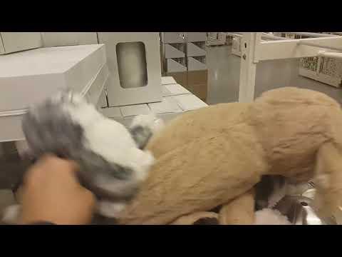 Xxx Mp4 Hot Furry Threesome 3gp Sex