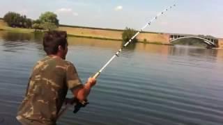 Enorme pesce siluro over 2 metri