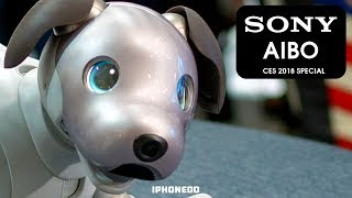This A.I. Dog Is Your New Best Friend — Sony AIBO [CES 2018 Special]