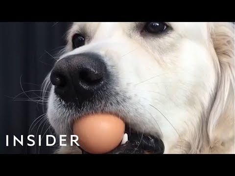 Xxx Mp4 Dogs Try The Viral Egg Challenge 3gp Sex