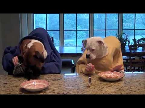 Two dogs eating in restaurant
