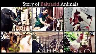 Story Of Bakra Eid Animals (Social Media Edition) | Bakra Eid 2016 | The Idiotz