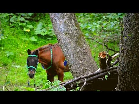 Xxx Mp4 Hikers Found This Horse Alone In The Woods Then They Looked At His Face And Realized… 3gp Sex