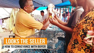 Galiff Street​ Dog Market Kolkata |Best place to buy pet Puppy Dogs and Rabbits Market KOLKATA India