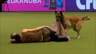 Crufts 2017 Lusy & Deril - heelwork to music international freestyle - Military