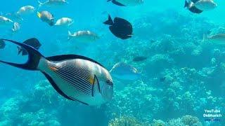Schnorcheln Makadi Bay Red Sea Rotes Meer Makadi Palace Hotel Qesm Hurghada Egypt