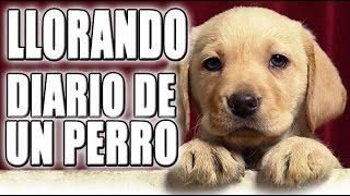 DIARIO DE UN PERRO - ZELLEN LLORANDO | ZellenDust