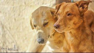 معلومات عن الكلب البلدي (كلب الشارع) stray dogs !!!