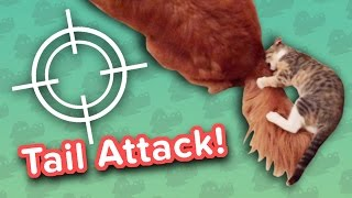 Tail Attacks & Giant Rabbits Snacking! // Funny Animal Compilation