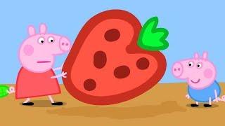 Peppa Pig en Español Episodios completos - Peppa cultiva fresas! - Dibujos Animados