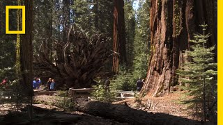 Top 5 Must-See Attractions in Yosemite | National Geographic