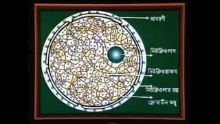 Biology 2nd paper || Animal Cell Structure And Function || Chapter : 2 || Part : 4 || Class : HSC