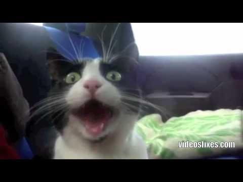 Reação de um Gato na Primeira Viagem de Carro