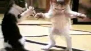قطه ترقص بابا حبيبي بابا
