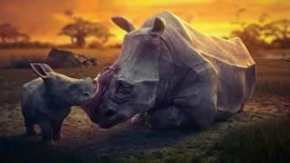 Sad Animation - The Animals Life