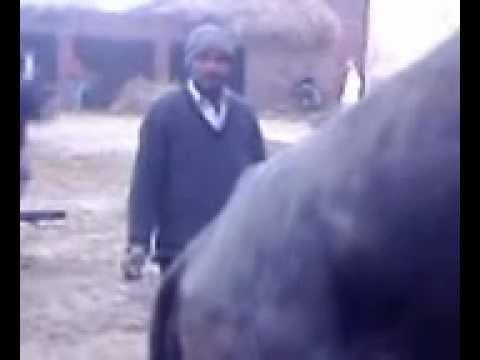 fucking buffalo 22